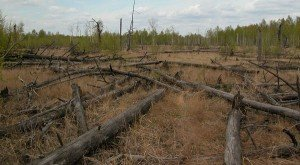trees_on_ground_in_red_forest_of_the_chernobyl_zone_dscn4332_edited.jpg_800x600_q85_crop